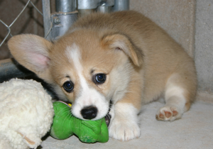 The way to Potty Train a Puppy