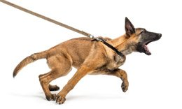 How to Leash Train a Dog – Stop Your Dog From Pulling