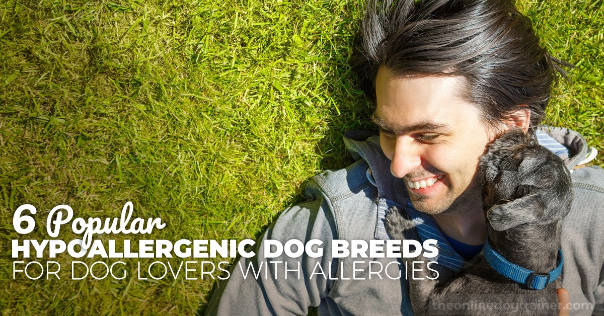 6 Popular Hypoallergenic Dog Breeds for Dog Lovers with Allergies [Stirring Read!]