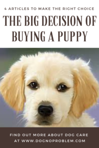 Buying A Puppy