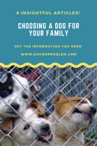 Choosing A Dog for Your Family