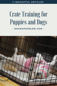 Crate Training Puppies and Dogs