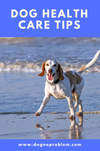 DOG HEALTH CARE TIPS