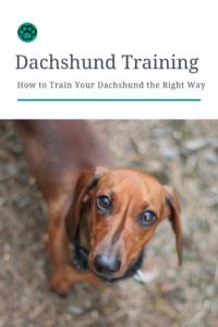 Dachshund Training