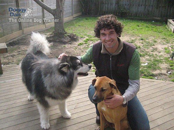 Cheap Dog Training - Save Money on Dog Training