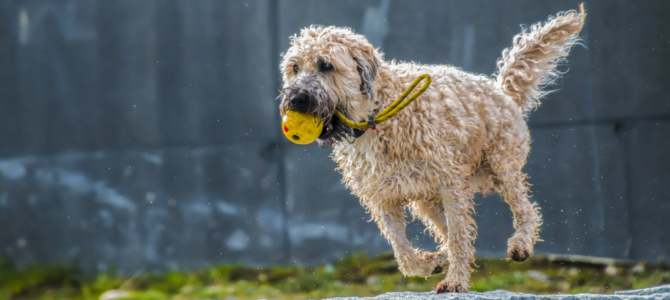 Dog Fitness: Your Dog Needs an Active Lifestyle!