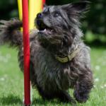 Dog Agility Training - (Almost) Every Tip & Trick You Should Own [With 3 Videos!] 1