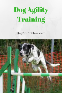 Dog Agility Jumps