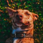 Dog Behavior Meaning