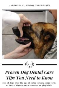 Dog Dental Care Tips