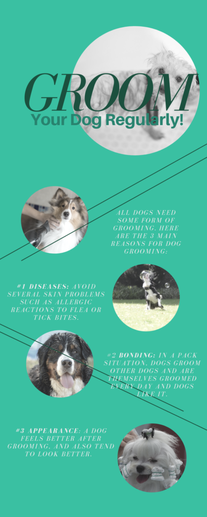 Dog Grooming Tips in 5 Articles & 3 Videos