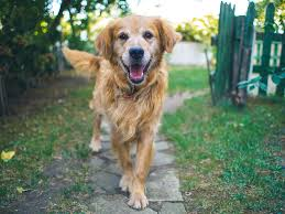 Dog Happiness - How to Make the Best for Your Dog (New!) 2
