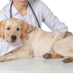 Dog Health Care: A Practical Guide in 11 Parts (With 3 videos!) 6