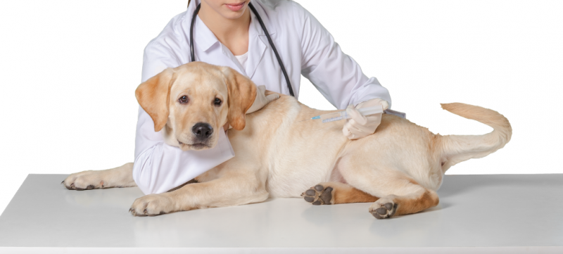 Dog Health Care: A Practical Guide in 12 Parts (With 3 videos!) 1
