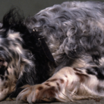 Dog Mange: Varieties, Causes, Symptoms & Treatments (Must-Know Tips!) 2