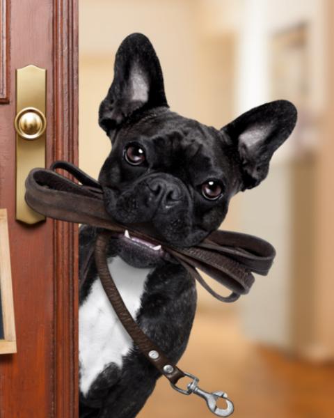 Dog Off-Leash Training