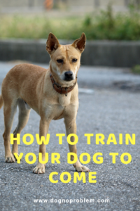 Dog Recall Training