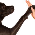 Dog Training (1)