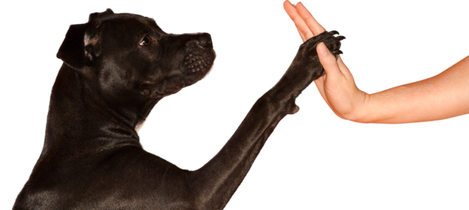 Dog Training Basics – Learn How to Train Your Dog At the Best! (9 Articles!)