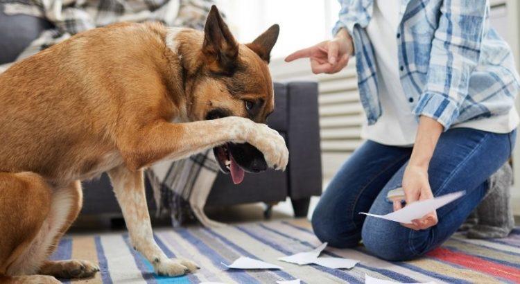 Dog Training Quotes