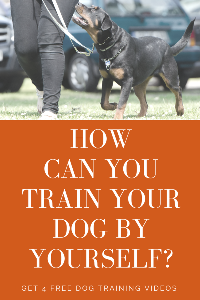 Dog training videos - DIY dog training