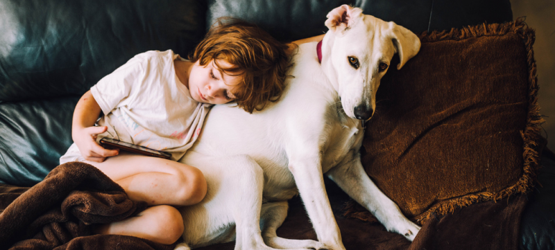 Good Dogs: How to Get a Dog with a Good Disposition 1