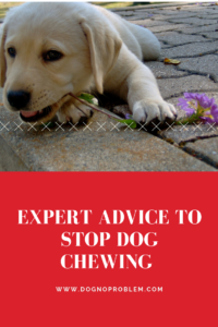 Expert Advice to Stop Dog Chewing