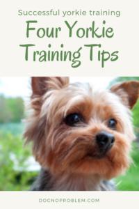 Four Yorkie Training Tips