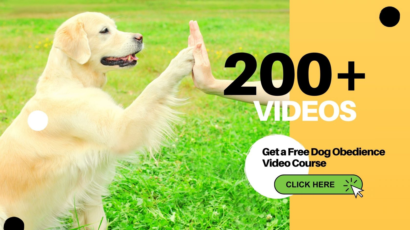Get Free Dog Obedience Video Course