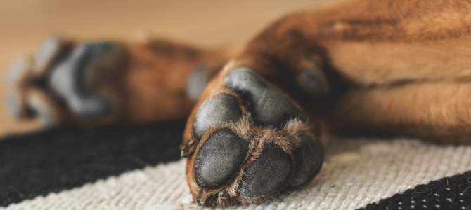 Heartworm in Dogs – Prevention. Other Dog Health Care Tips