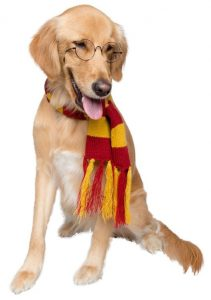 Hipster Pet Wizard Scarf