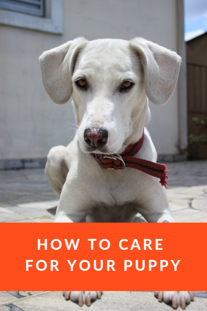 Puppy Care and Training 101 - How to Look After Your New Dog 1