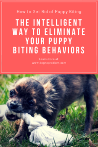 How to Get Rid of Puppy Biting (1)