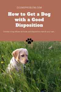 How to Get a Dog with a Good Disposition