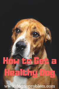 How to Get a Healthy Dog