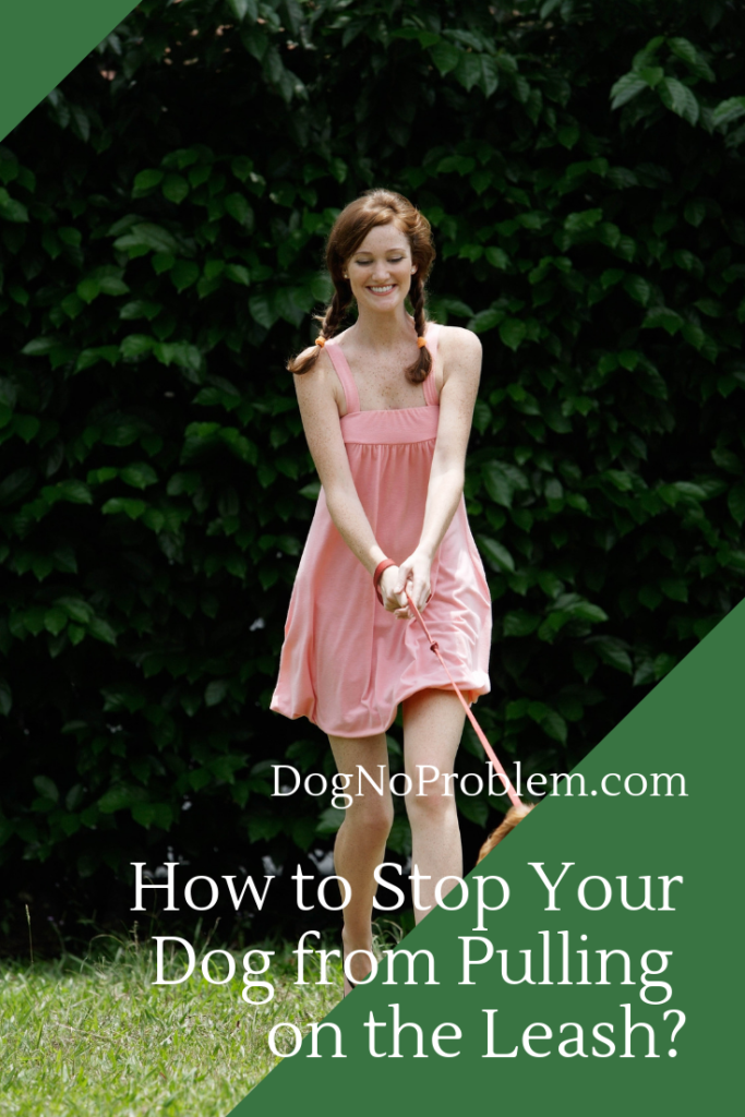 How to Stop Your Dog from Pulling on the Leash_