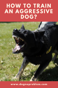 How to train an aggressive dog