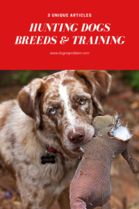 Hunting Dogs Breeds & Training (1)