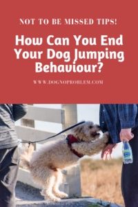 Jumping Dog Behavior