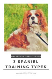 King Charles Spaniel Training