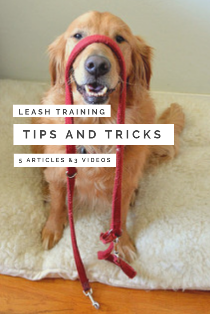 Leash Training Tips and Tricks 2
