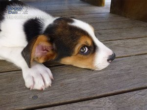Fearful Dogs – How to Help Them