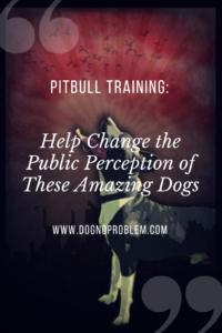 Pitbull Training_