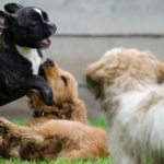 Puppy Care and Training: the Basics