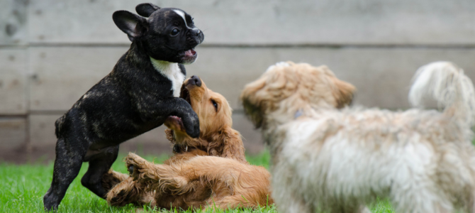 Puppy Care and Training 101 – How to Look After Your New Dog