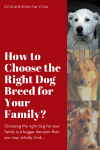 Right Dog Breed for Your Family