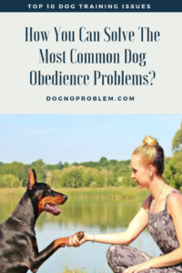 10 Critical Issues for Dog Obedience Training 2