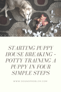Starting Puppy House Breaking – Potty Training A Puppy In Four Simple Steps