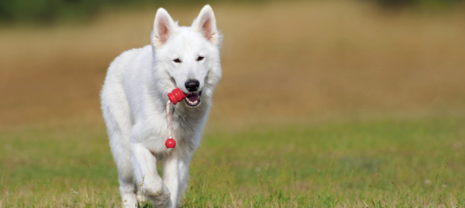 Clicker Training – An Different Way to Train Your Dog (with 5 Videos!)