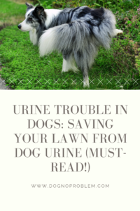 Urine Trouble in Dogs_ Saving Your Lawn from Dog Urine (Must-Read!)